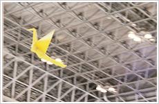 写真 - ORIZURU飛行の様子