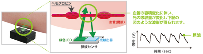 光学式脈波センサのしくみ